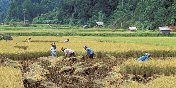 Climate change, rice crops, and violence. Evidence from Indonesia