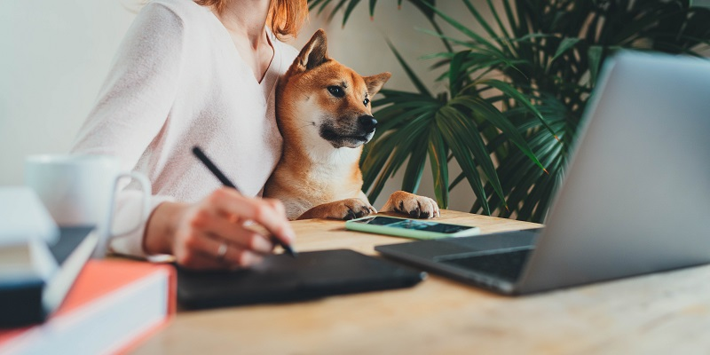 Home Office Concept, Young female freelancer working remotely from home sitting with her shiba inu dog on arms using laptop computer and stylus drawing sketches on touchpad for graphic designers